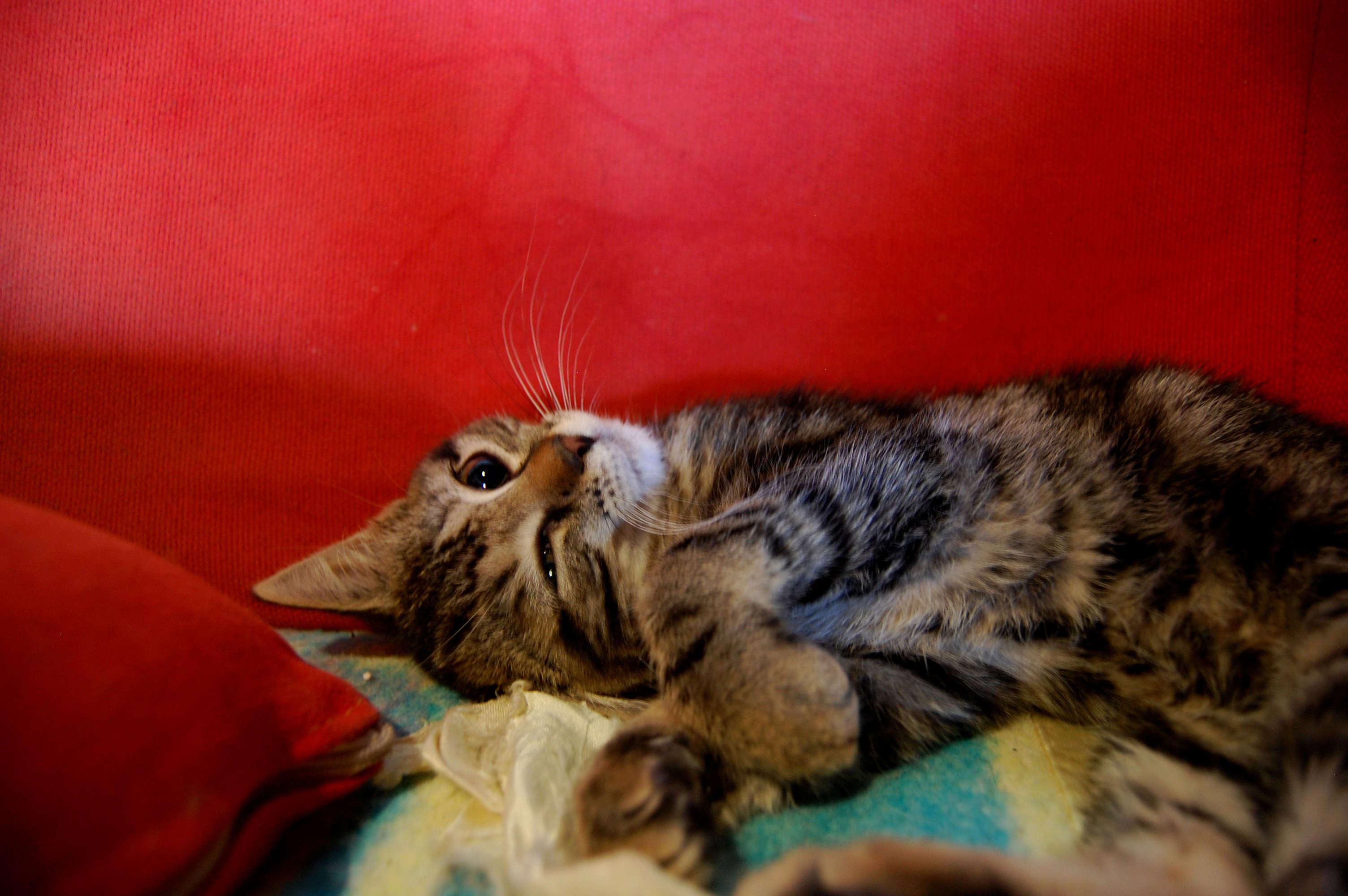 Nalin, chatonne à adopter Dsc_0465