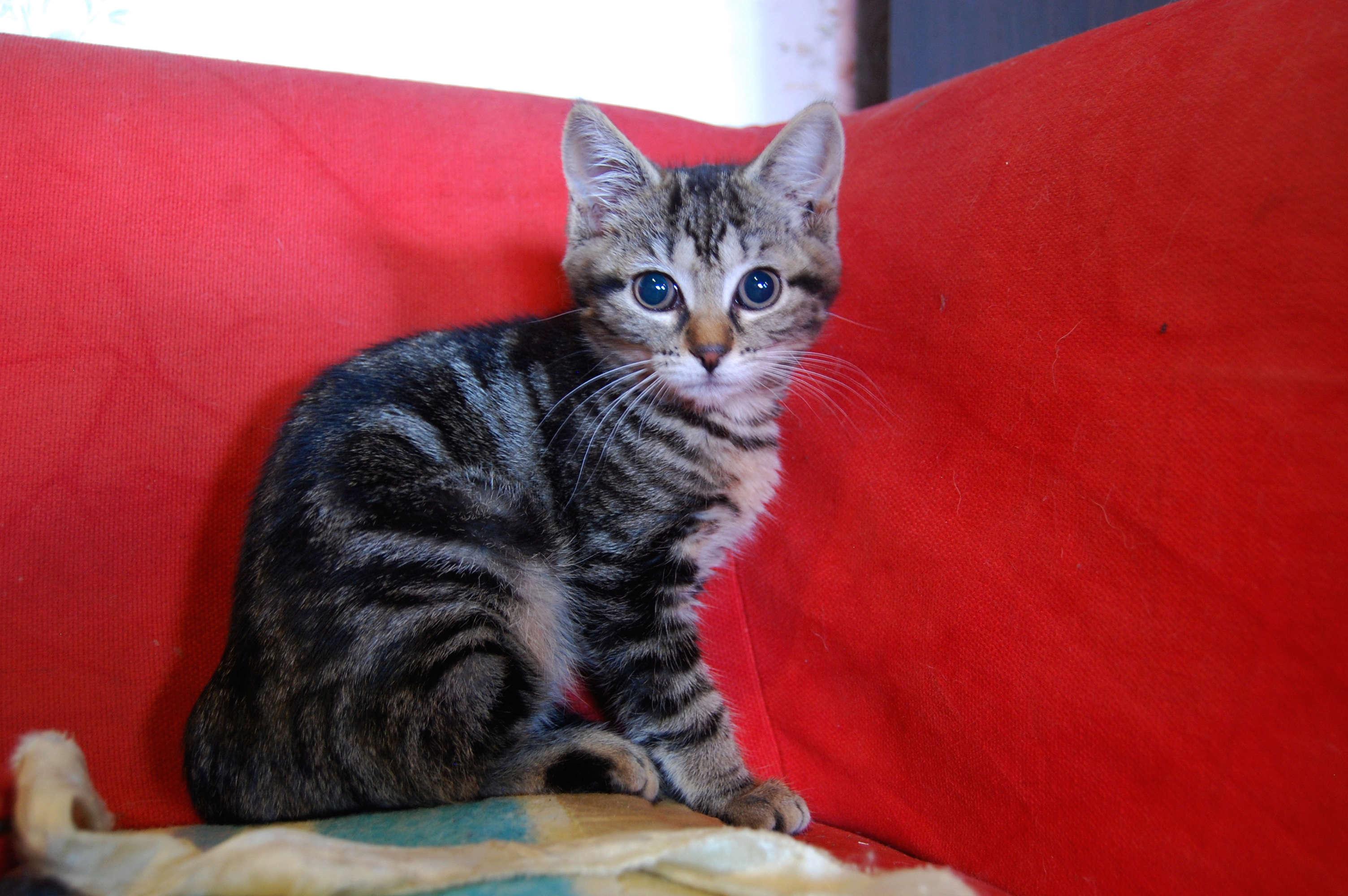 Nalin, chatonne à adopter Dsc_0466