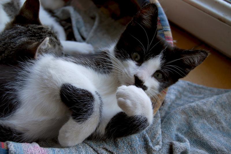 Ganoush et Adolf, deux chatons - ADOPTÉS Dsc_0711