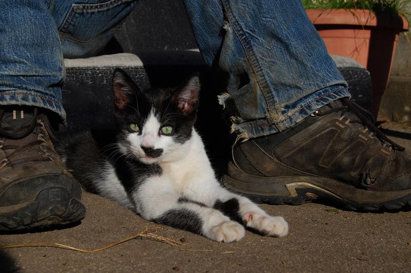 Ganoush et Adolf, deux chatons - ADOPTÉS Dsc_1026