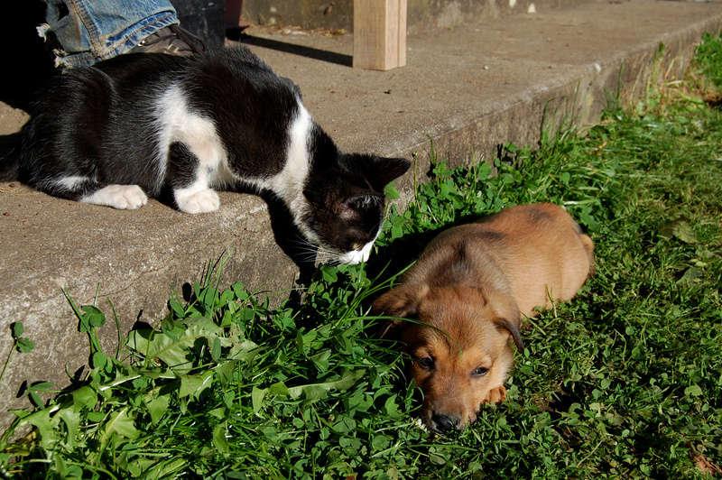 Ganoush et Adolf, deux chatons - ADOPTÉS Dsc_1027