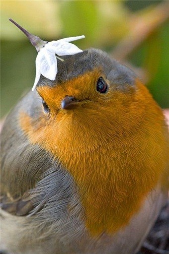 Identification oiseaux D17d1f10
