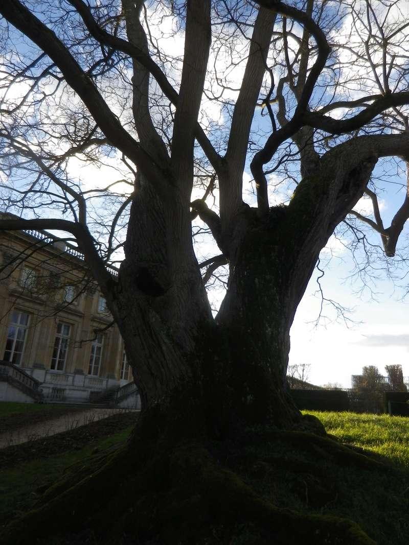 Les jardins du Petit Trianon - Page 3 Imgp0445