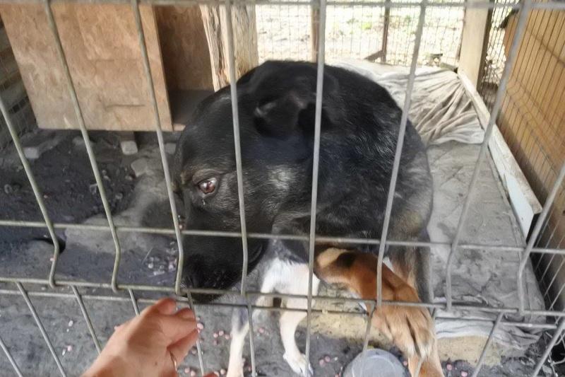TINNA,  née en 2012 trouvée dans la rue par Lenuta - marrainée par lilirez02 -R-SC 22555317