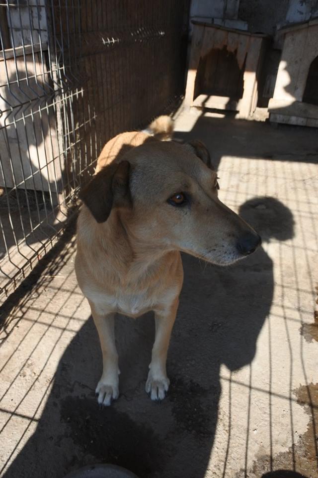 BAILEYS, née en 2011, sauvée de l'équarrissage - parrainée par Nathalie -SOS-R-SC - Page 2 22688515