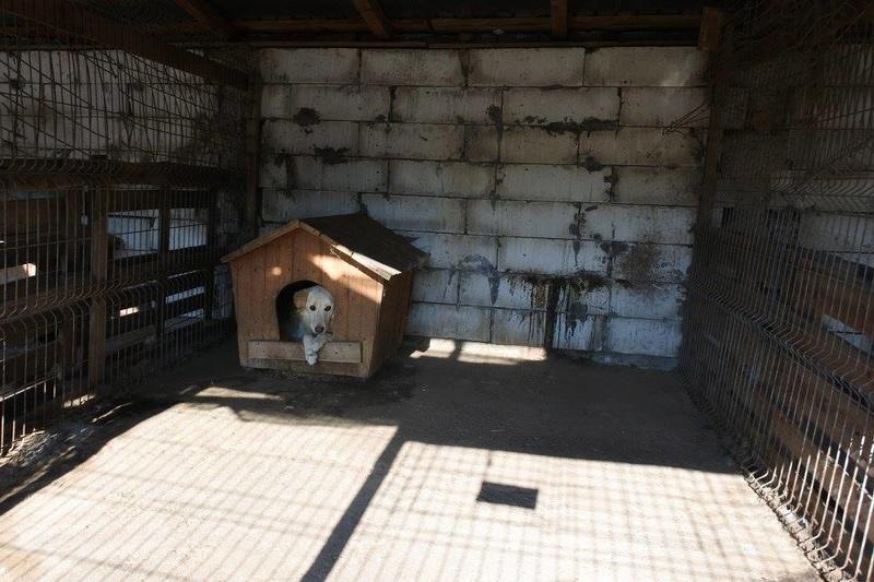 BALANUCH, mâle croisé berger sauvé de Pallady, né en 2009 parrainé par Nathalie Gamblin-SC-R-SOS- - Page 2 22713210