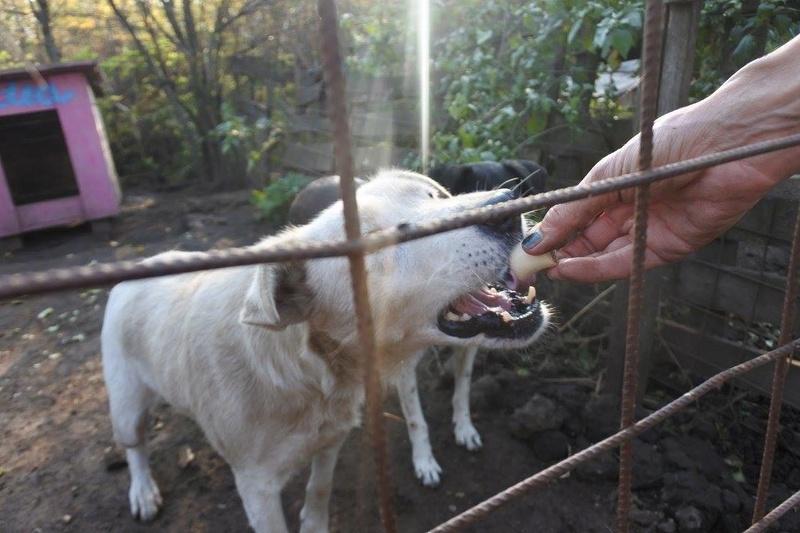 DULCE - Magnifique femelle Blanche - née en 2009 - Parrainée par Samie -SOS-FB-R-SC-  - Page 3 22770810