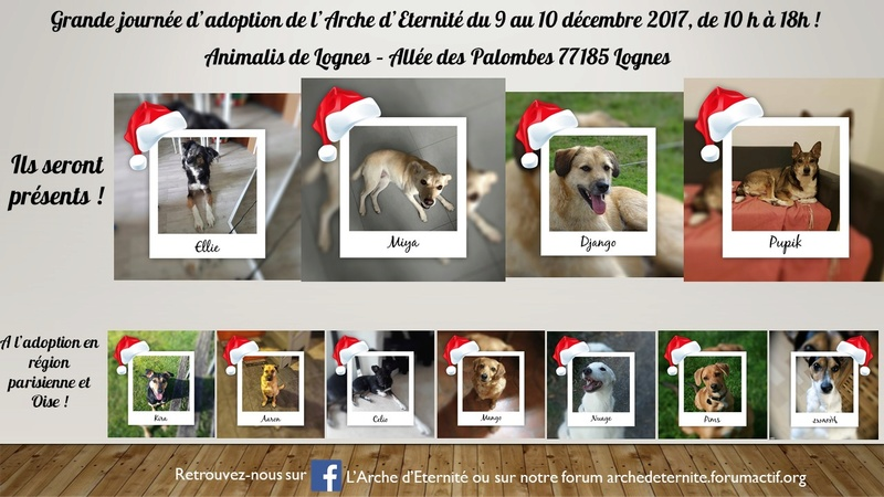 weekend adoption des 9/10 décembre 2017 - Page 2 Prysen10