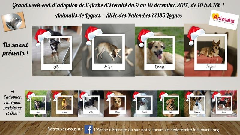 weekend adoption des 9/10 décembre 2017 - Page 3 Prysen13