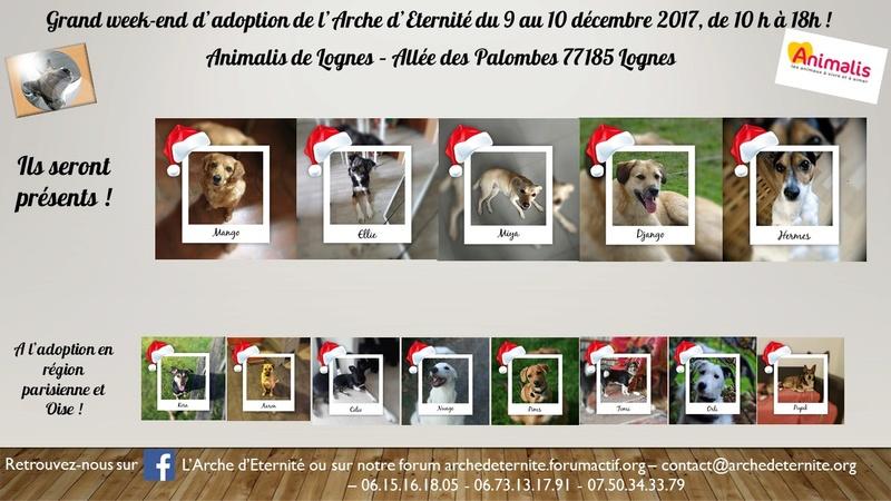 weekend adoption des 9/10 décembre 2017 - Page 3 Prysen16