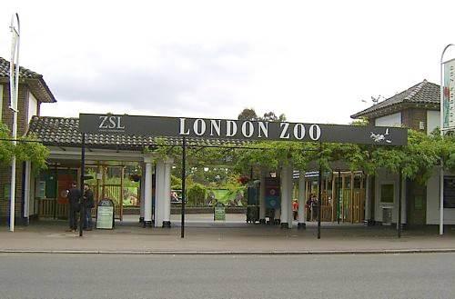 London Zoo London10