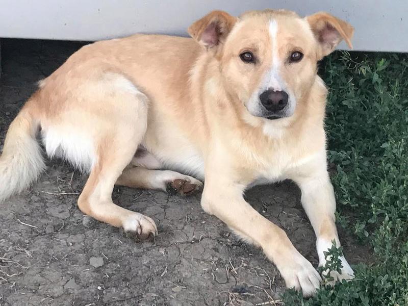 Karol - mâle - refuge Târgu Frumos - Réservé adoption par sa famille d'accueil (70) 25555710