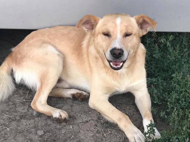 Karol - mâle - refuge Târgu Frumos - Réservé adoption par sa famille d'accueil (70) 25593410