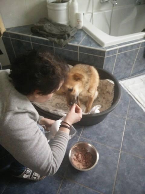 Lili (ex-Gigi) - femelle - refuge de Târgu Frumos - Adoptée(dept 67) 26804711