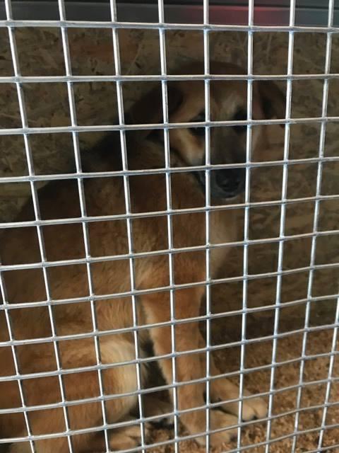Lili (ex-Gigi) - femelle - refuge de Târgu Frumos - Adoptée(dept 67) 26903810