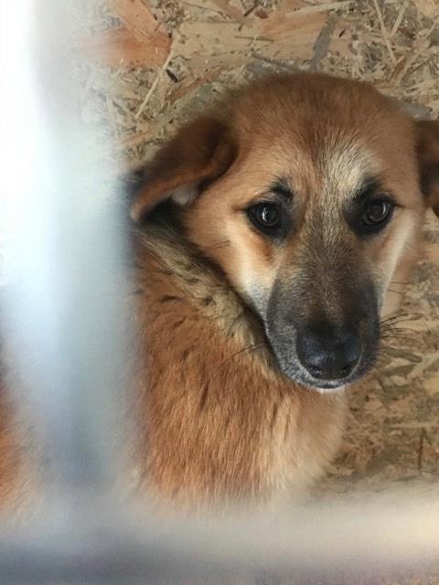 Lili (ex-Gigi) - femelle - refuge de Târgu Frumos - Adoptée(dept 67) 26908010