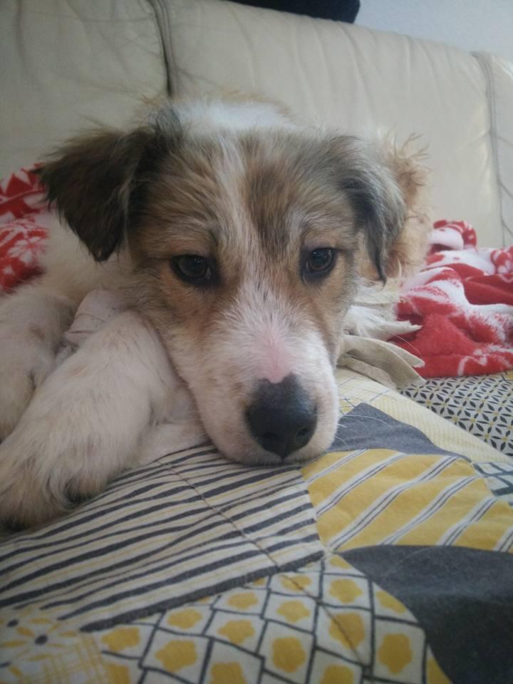 Isidore - mâle - refuge de Târgu Frumos - Adopté (dept 67) 27751911