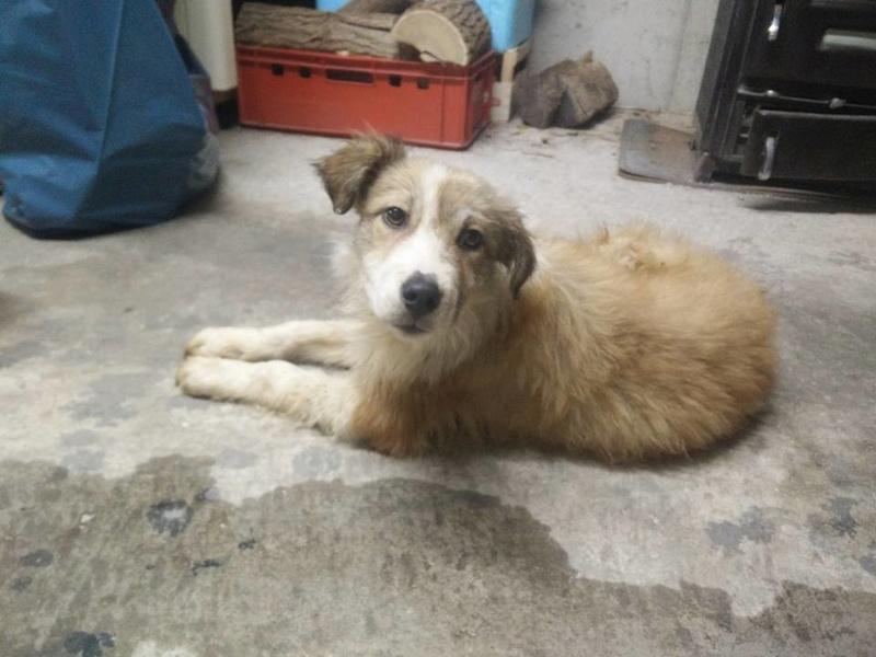 Isidore - mâle - refuge de Târgu Frumos - Adopté (dept 67) 27858510