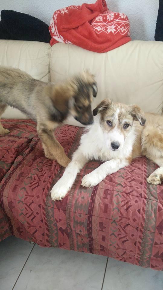Isidore - mâle - refuge de Târgu Frumos - Adopté (dept 67) 28056512