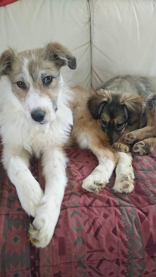 Isidore - mâle - refuge de Târgu Frumos - Adopté (dept 67) 28280012