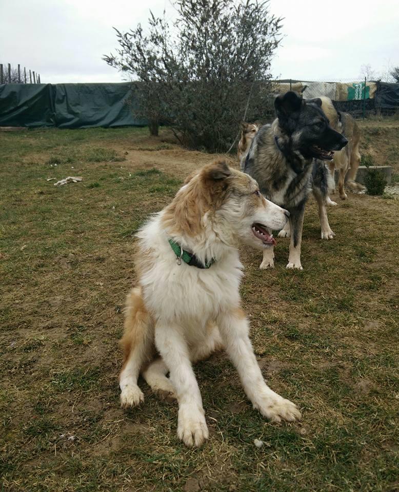 Isidore - mâle - refuge de Târgu Frumos - Adopté (dept 67) 28782810