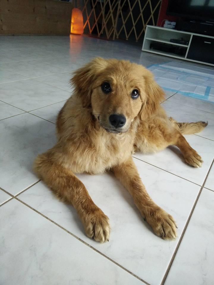 marla - Marla (ex Marlene) - femelle - chez Rudy (IASI) - en famille d'accueil dans le 67 28871911
