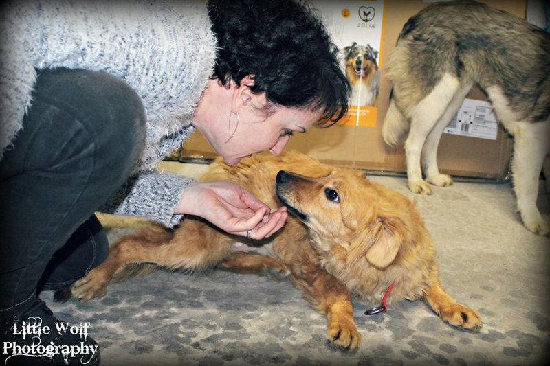 marla - Marla (ex Marlene) - femelle - chez Rudy (IASI) - en famille d'accueil dans le 67 28951410