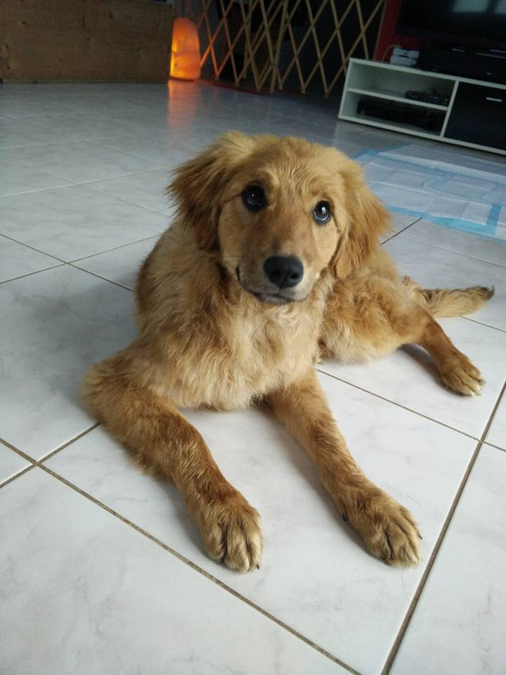 marla - Marla (ex Marlene) - femelle - chez Rudy (IASI) - en famille d'accueil dans le 67 29067410