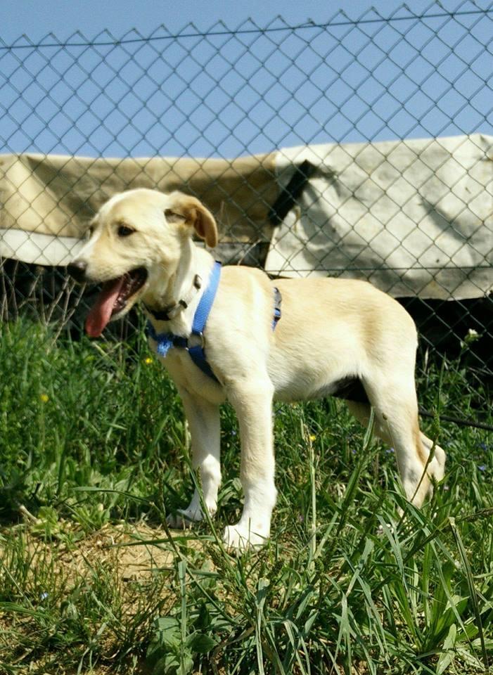 Aramis - mâle - chez Andreea (Târgu Frumos) - réservé adoption (68) 31486910