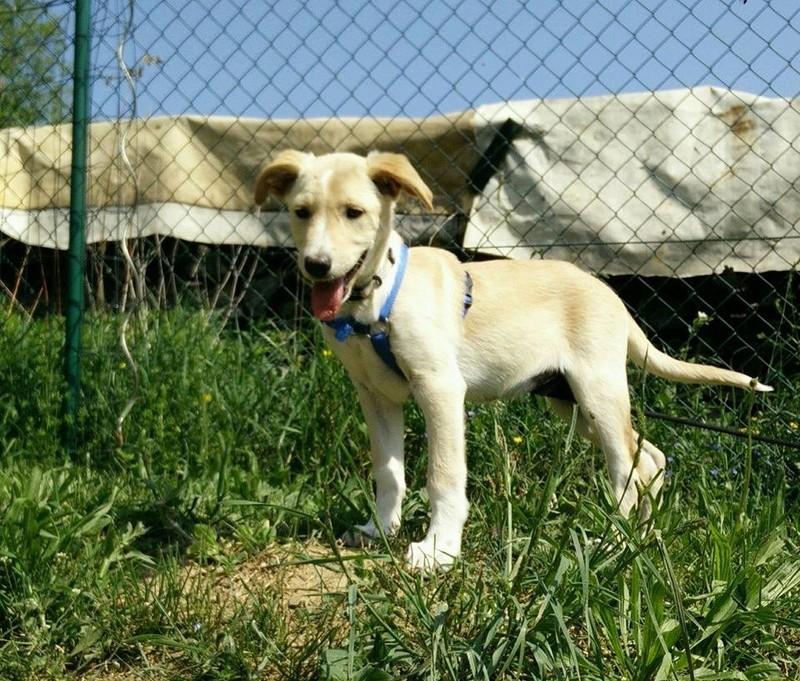 Aramis - mâle - chez Andreea (Târgu Frumos) - réservé adoption (68) 31919610