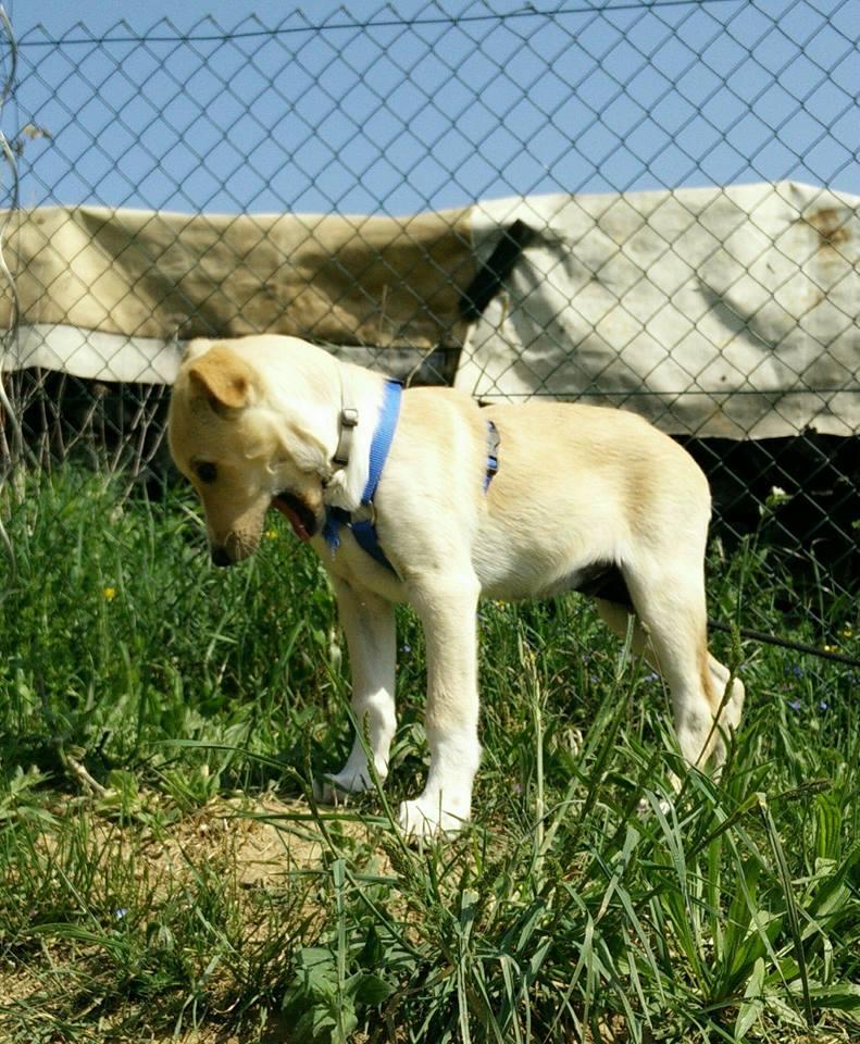 Aramis - mâle - chez Andreea (Târgu Frumos) - réservé adoption (68) 31947810