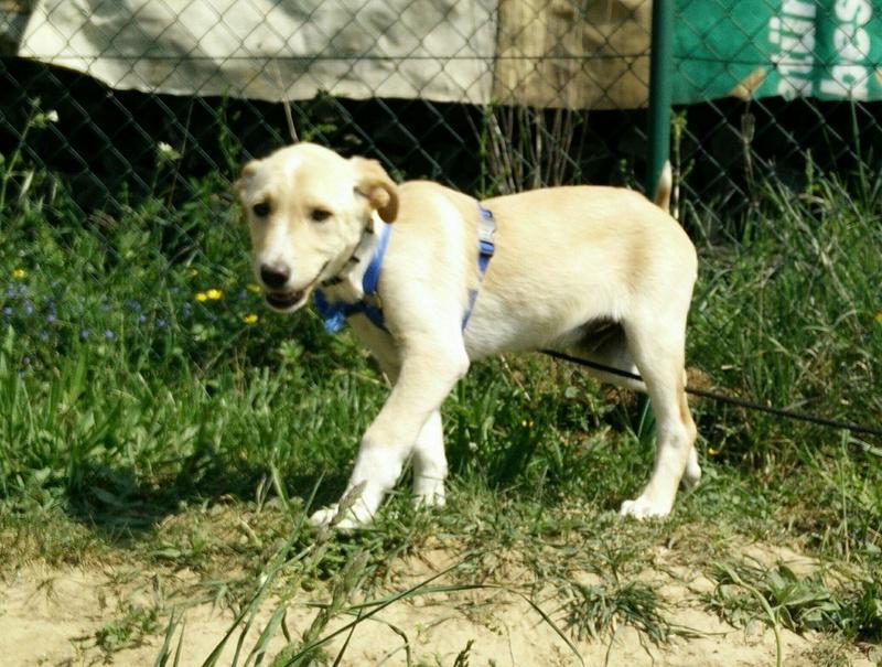 Aramis - mâle - chez Andreea (Târgu Frumos) - réservé adoption (68) 31948710