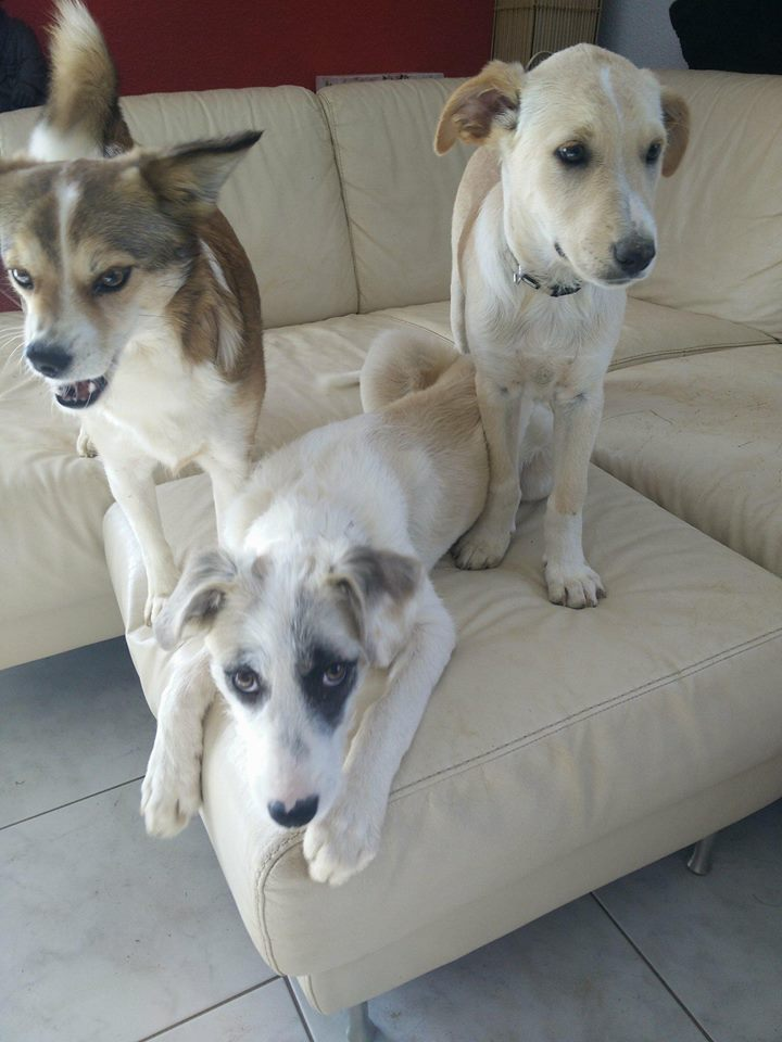 Aramis - mâle - chez Andreea (Târgu Frumos) - réservé adoption (68) 32081310