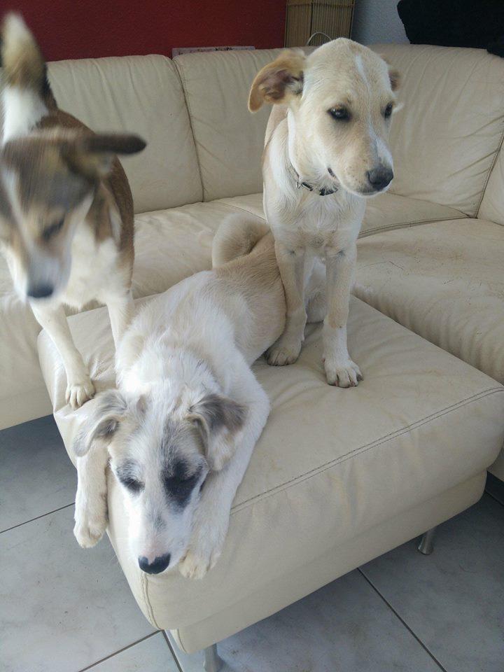 Aramis - mâle - chez Andreea (Târgu Frumos) - réservé adoption (68) 32089710