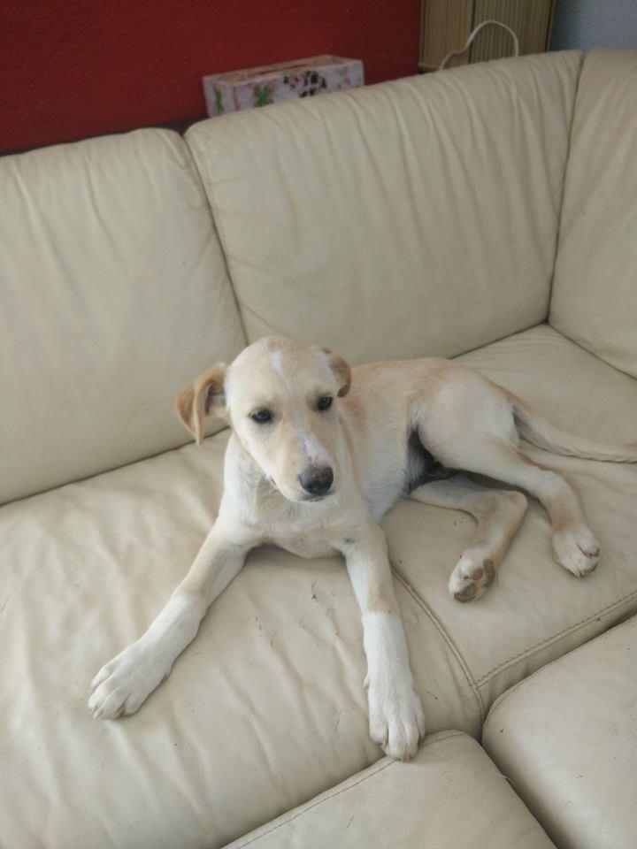 Aramis - mâle - chez Andreea (Târgu Frumos) - réservé adoption (68) 32095410