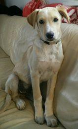 Aramis - mâle - chez Andreea (Târgu Frumos) - réservé adoption (68) 32847911