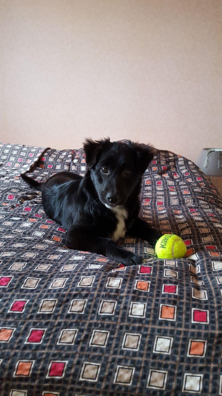 Mia (ex-Petro) - femelle - refuge de Târgu Frumos - adoptée par sa FA (dept 67) Img-2018