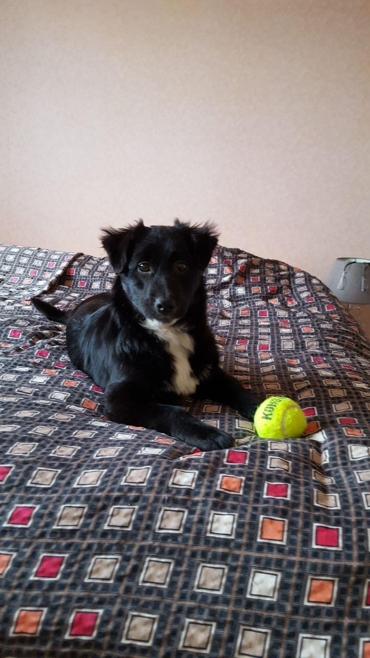 Mia (ex-Petro) - femelle - refuge de Târgu Frumos - adoptée par sa FA (dept 67) Img-2021