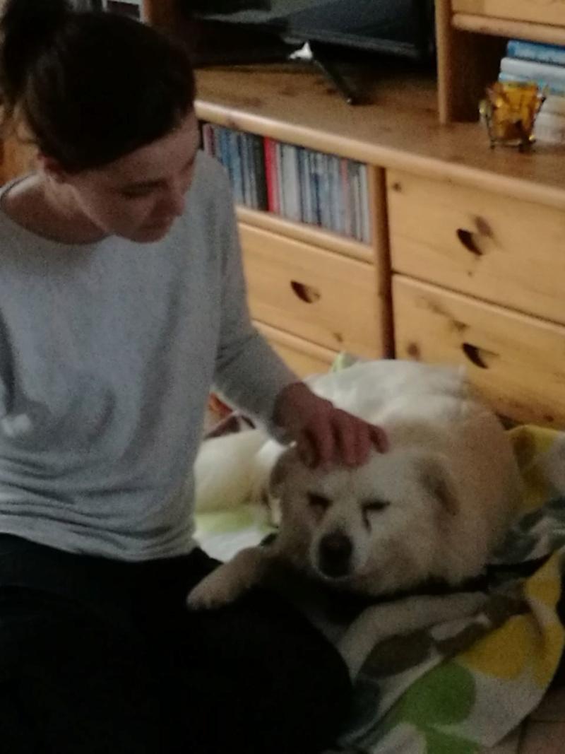 Malakaï  - mâle - refuge de Târgu Frumos - adopté Allemagne Img-2023