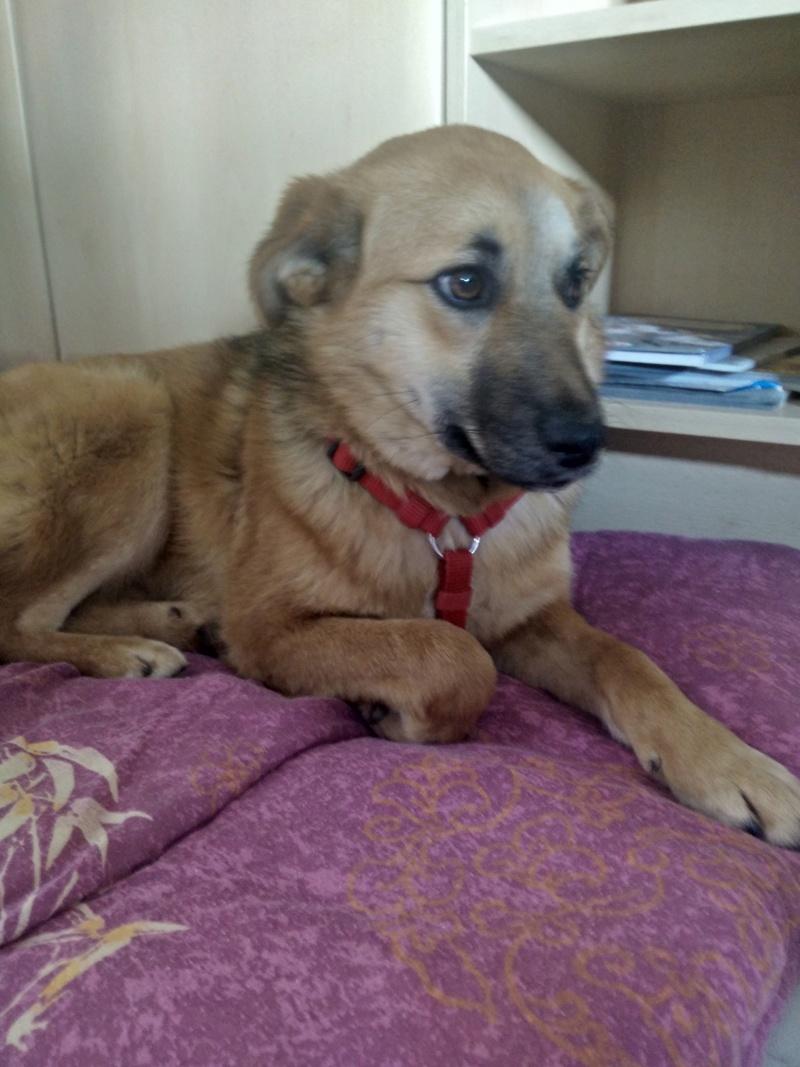 Lili (ex-Gigi) - femelle - refuge de Târgu Frumos - Adoptée(dept 67) Img_2020