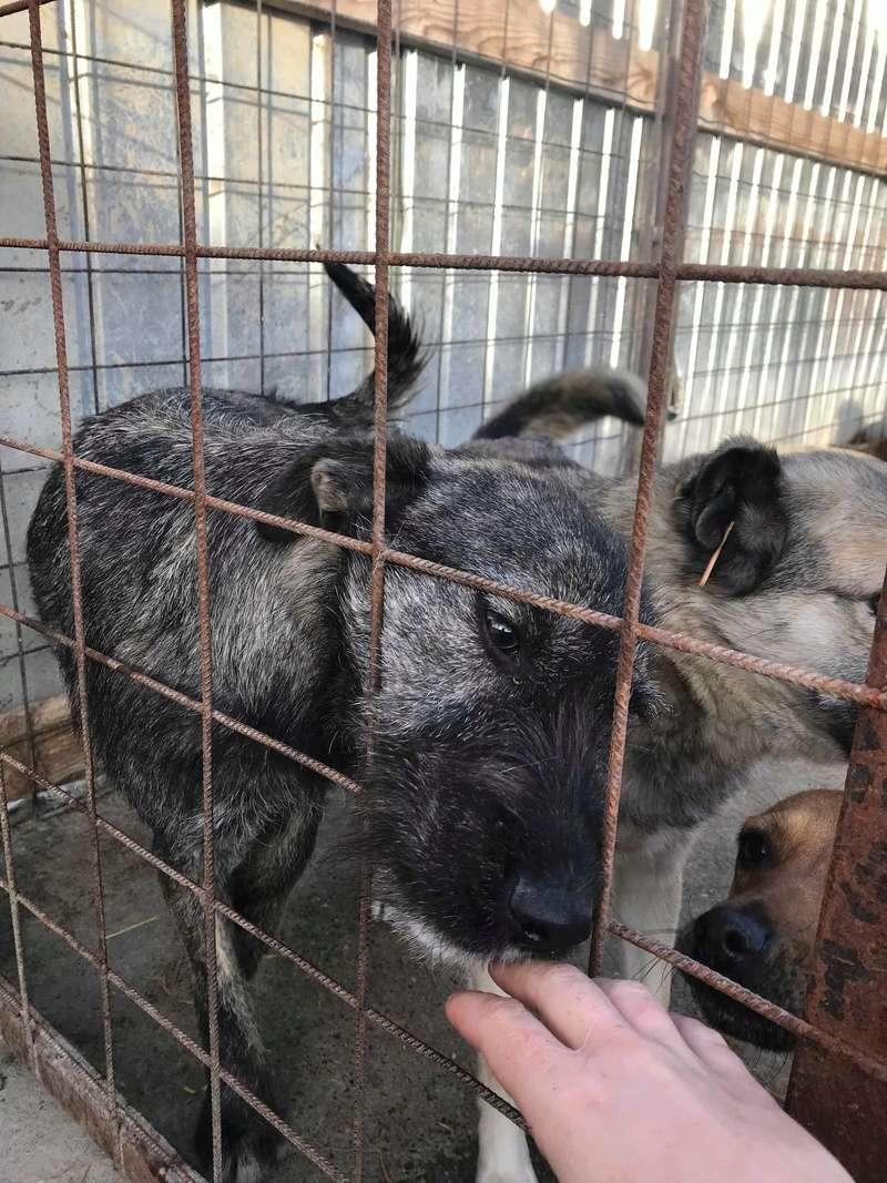 Lula - femelle - Refuge de Târgu Frumos  - Adoption par Nicolas dept 67 Receiv10
