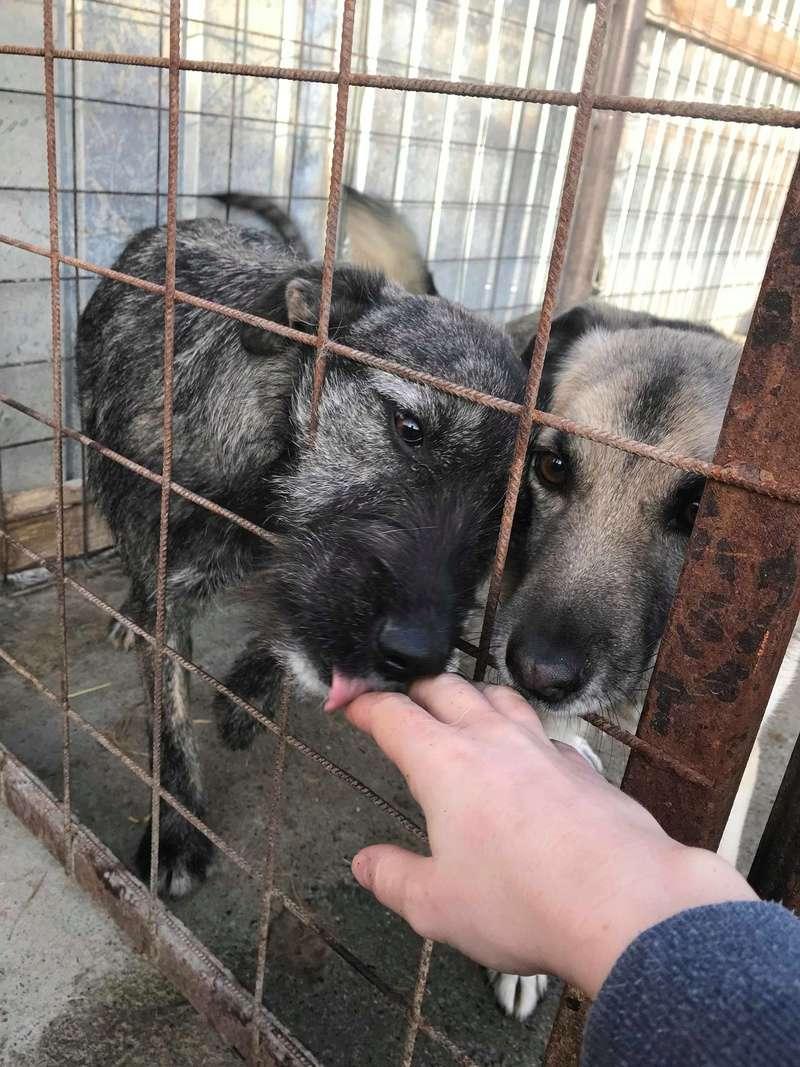 Lula - femelle - Refuge de Târgu Frumos  - Adoption par Nicolas dept 67 Receiv12