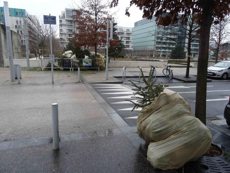 Collecte de sapins par Grand Paris Seine Ouest (GPSO) Dsc05551