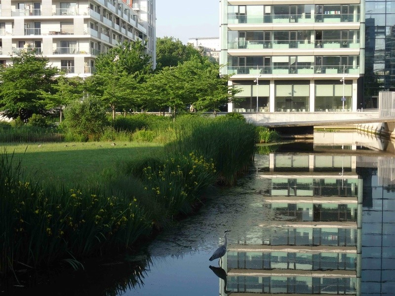 Hérons du Parc de Billancourt Dsc07651