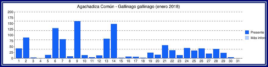 Avistamientos Agachadiza Común en Bélgica - Enero, Febrero y Marzo Gyyfic16