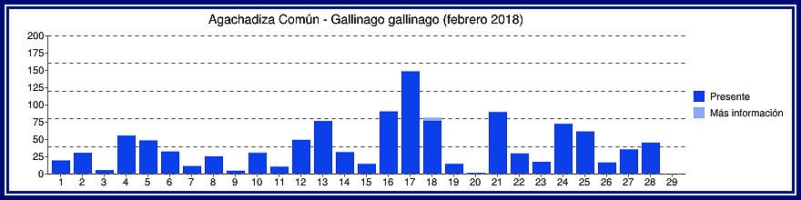 Avistamientos Agachadiza Común en Bélgica - Enero, Febrero y Marzo Gyyfic23
