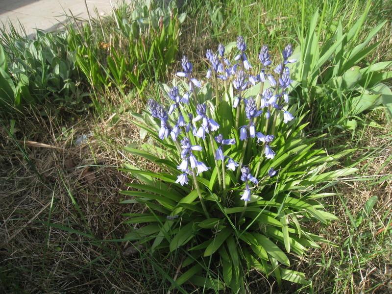 chez moi, en fleurs 00111