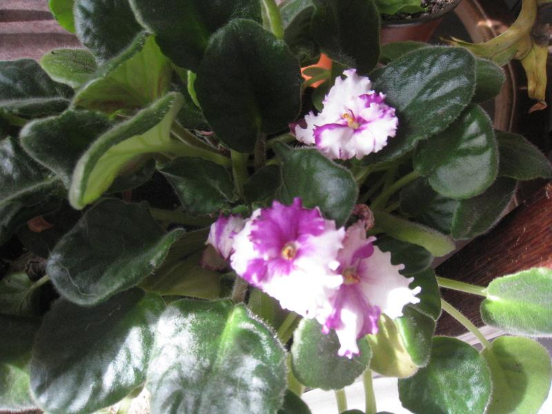 un peu de fleurs 00510