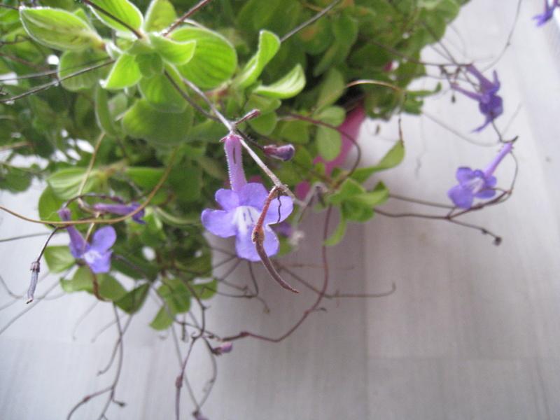un peu de fleurs 01210
