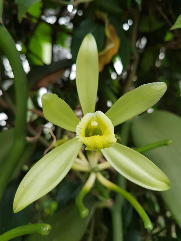 orchidée de la serre 30703710